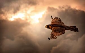 falcon_in_flight-2880x1800