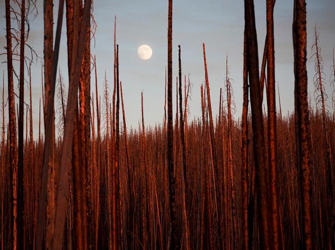 Silence Voice - 2012-10-30_172373_nature.jpg