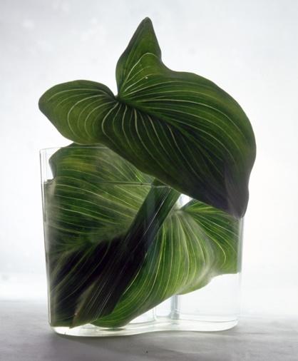 2 green leaves