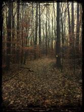 december-virginia-forest-copy