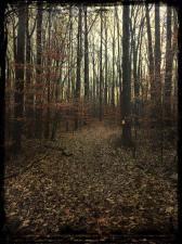 december-virginia-forest-copy