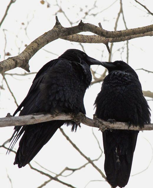 black bird black bird